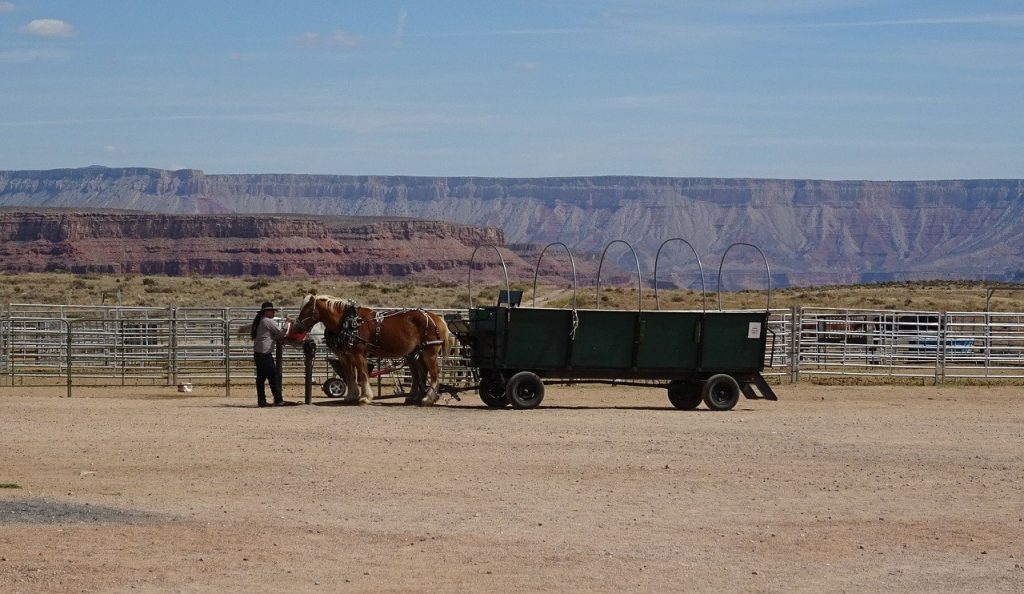 things to do in the grand canyon